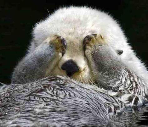 crown-conservation-a-super-fluffy-sea-otter-paw-scrubs-his-eyes